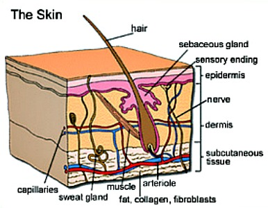 skin drawing acne
